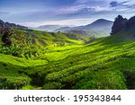 tea plantation in cameron... | Shutterstock . vector #195343844