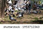 People Watching Pigeons During...