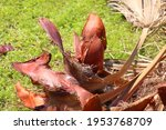 Palm Tree Bark  Deep Brown ...