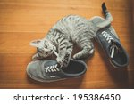 Stock photo puppy cat playing with shoes at home 195386450