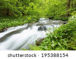 Forest Stream Surrounded By...