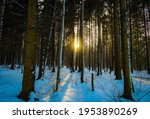 Winter Forest At The Sunset Time