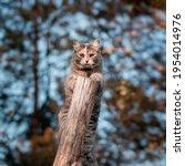 Cute Gray Cat Climbed On A Log...