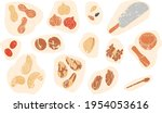 vector set of nuts  seeds and...   Shutterstock .eps vector #1954053616