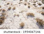 Desert Plants. Cracks In The...