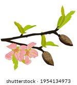 almond branch with flowers... | Shutterstock .eps vector #1954134973