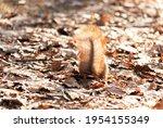 Big Beautiful Tail Of A...