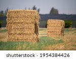 Square Bale Of Hay In The Field