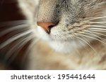 Cat Nose Close Up
