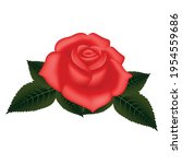 Vector Rose Flowers And Petals...