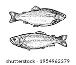 sketch of fish. hand drawn... | Shutterstock .eps vector #1954962379