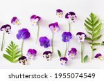 Beautiful Pansy Violet Summer...