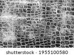 distressed overlay texture of...   Shutterstock .eps vector #1955100580