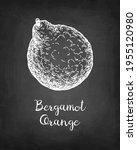 bergamot orange. chalk sketch... | Shutterstock .eps vector #1955120980
