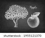 apple. fruit and tree. chalk... | Shutterstock .eps vector #1955121370