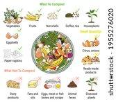 infographic of composting bin...   Shutterstock .eps vector #1955276020