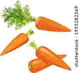 carrots set for banners  flyers.... | Shutterstock .eps vector #1955282269