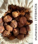 Indian Soapnuts. The Sapindus...