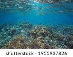 Healthy Coral Reef Below Water...