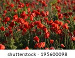 wild poppy flowers in a field.   | Shutterstock . vector #195600098
