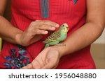Taking Care  Feeding Pet Bird...