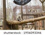 Monkeys Are Having Fun In Their ...