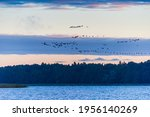 Birds Flying Over A Lake At...