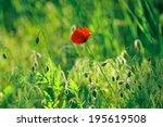 one red poppy on green grass...   Shutterstock . vector #195619508
