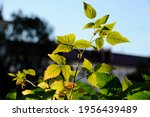 Beautiful Green Leaves On...