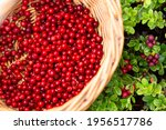 Wicker Basket With Red Ripe...