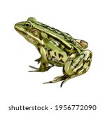Green Frog From A Splash Of...