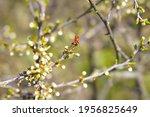 Spring  A Ladybug Takes Off...