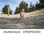 cute beagle dog running outdoor ... | Shutterstock . vector #1956941653