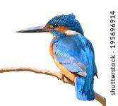 A Beautiful Kingfisher Bird ...