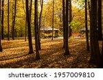 Autumn Park On A Sunny Fine Day....
