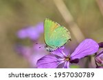Little Green Butterfly On A...