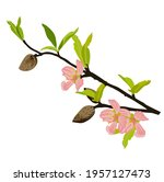 almond branch with flowers... | Shutterstock .eps vector #1957127473