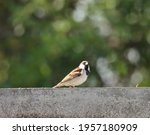 India  6 April  2021   Sparrow...