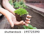 holding a seedling | Shutterstock . vector #195725390