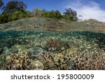 A Variety Of Corals And Fish...