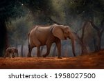Forest Elephant At Mana Pools...