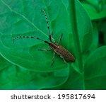gray beetle sitting in green...   Shutterstock . vector #195817694