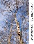 Birdhouse On A Pine Tree...