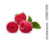 raspberry isolated on white. | Shutterstock .eps vector #195837350