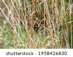 Textured Grassy Meadow in Sunlight with a Green Woodland Background ~A MEADOW