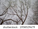 Bare Tree With Branches As...