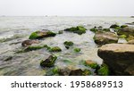 Green Algae Covered Boulders At ...