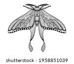 Vector Moth Of Hand Drawn...