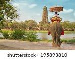 Tourists On An Elephant Ride...