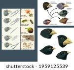 Natural selection and adaptation. Darwin